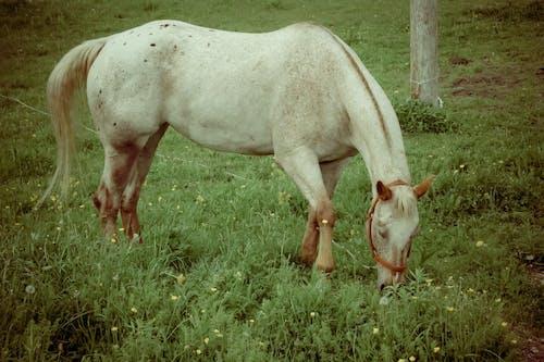Základová fotografie zdarma na téma kůň, pastvina