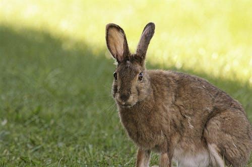 Základová fotografie zdarma na téma králíček, králík, sněžnicích, Velikonoce