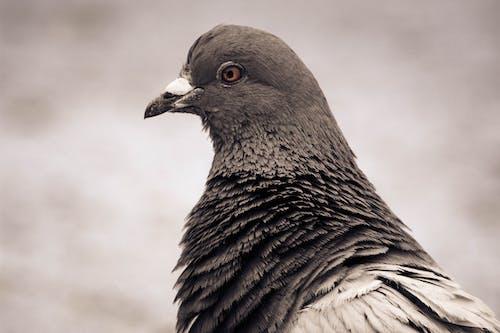Základová fotografie zdarma na téma holub