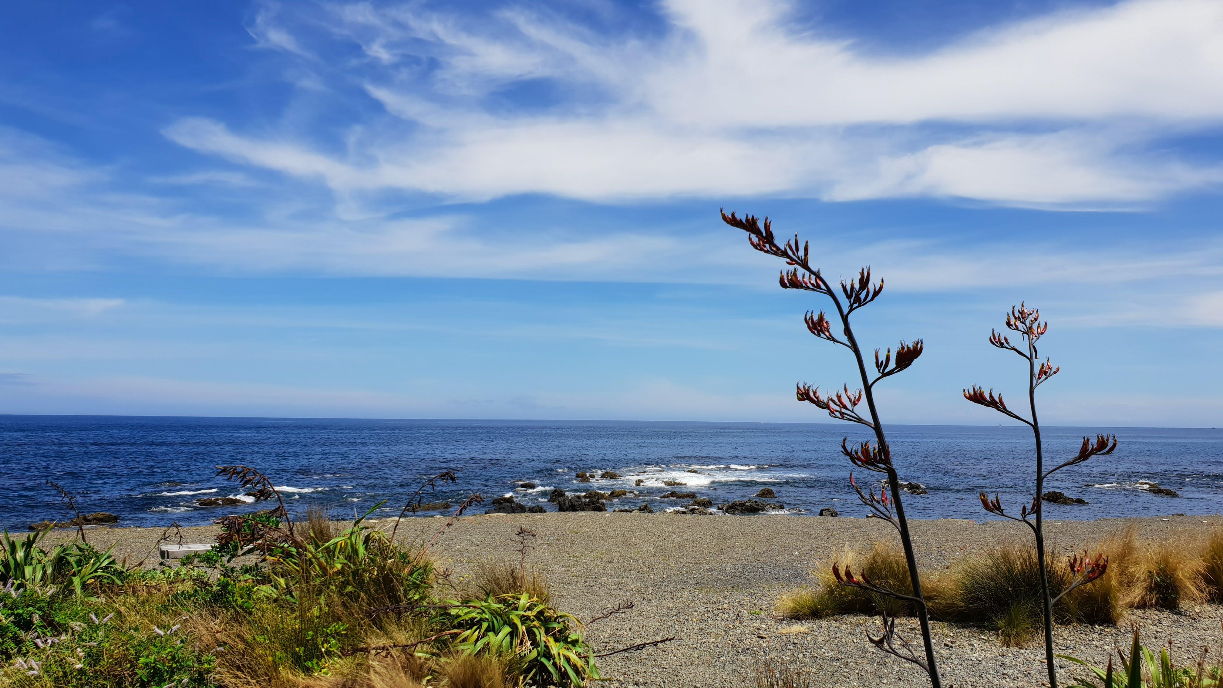 Kostenloses Stock Foto zu atemberaubend, bewölkt, blauer himmel, busch