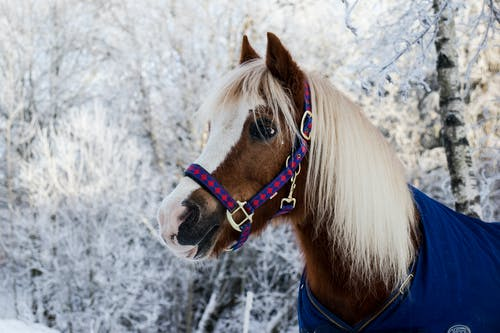 Photo of Brown Pony Standing Near Snow Covered Trees