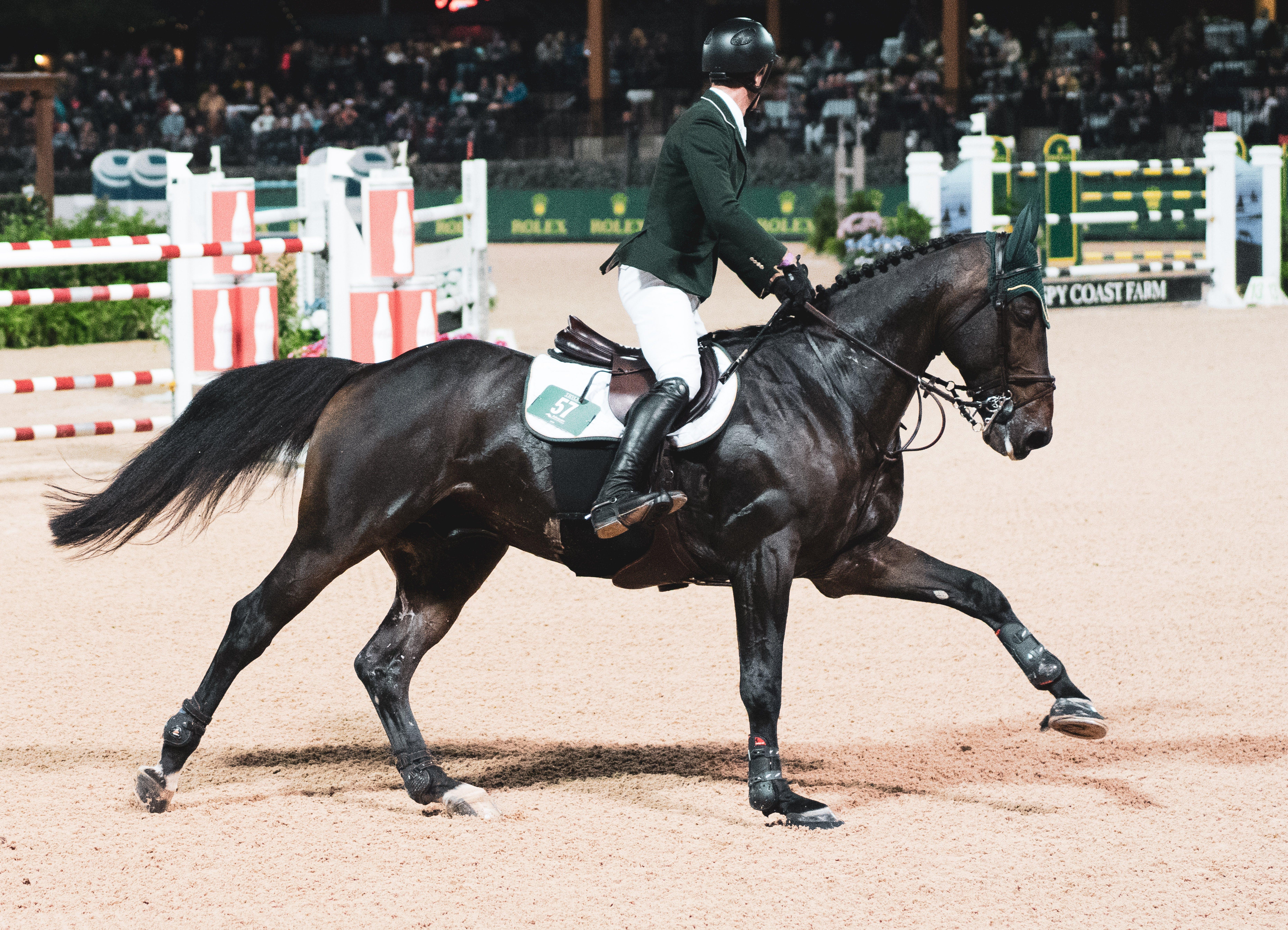 Free stock photo of equestrian, grand prix, horse, horseback riding