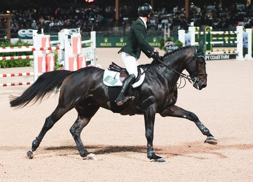 at, at binmek, atlama göstermek, atlı içeren Ücretsiz stok fotoğraf