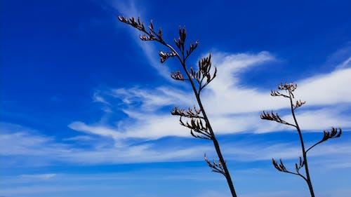 คลังภาพถ่ายฟรี ของ การถ่ายภาพมุมต่ำ, การเจริญเติบโต, ชายทะเล, ชายหาด