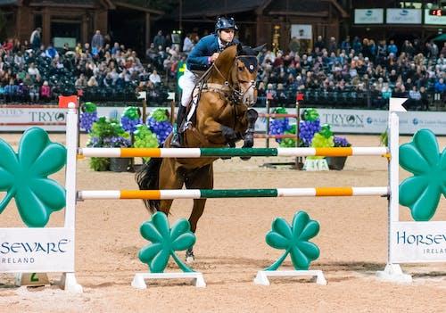 at, at binmek, at kestanesi, atlama göstermek içeren Ücretsiz stok fotoğraf