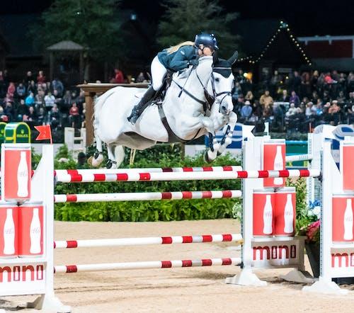 at, at binmek, atlama göstermek, grand prix içeren Ücretsiz stok fotoğraf
