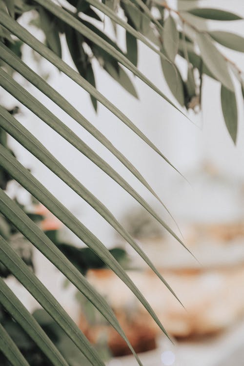 bitki, makro, yapraklar içeren Ücretsiz stok fotoğraf