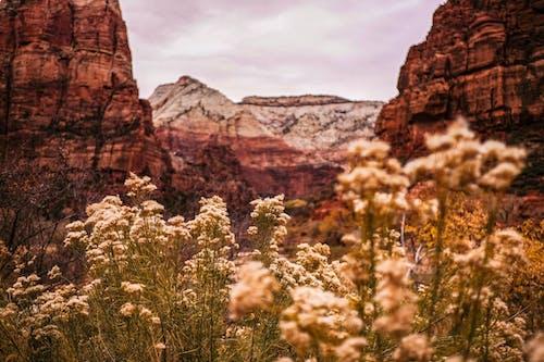 dağlar, doğa, ulusal park, zion içeren Ücretsiz stok fotoğraf