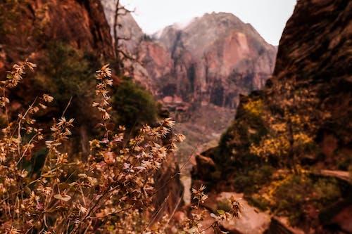 dağlar, doğa, zion içeren Ücretsiz stok fotoğraf