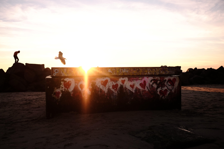 Free stock photo of losangeles, love