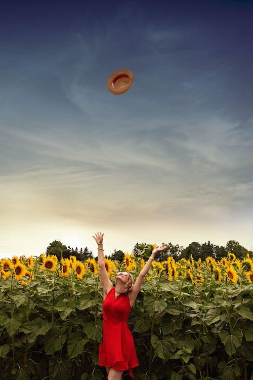 Immagine gratuita di campo di girasoli, cappello di paglia, cercando, cielo