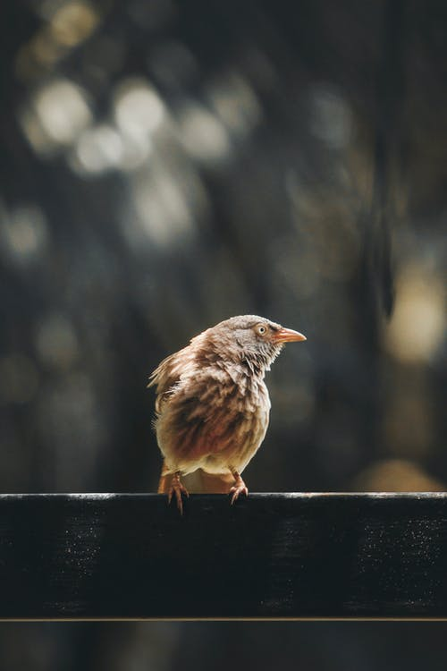 Close-Up Photo of Bird Perched on Railing