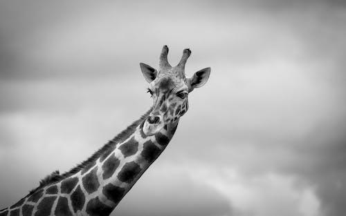動物, 動物攝影, 哺乳動物, 野生動物 的 免费素材照片
