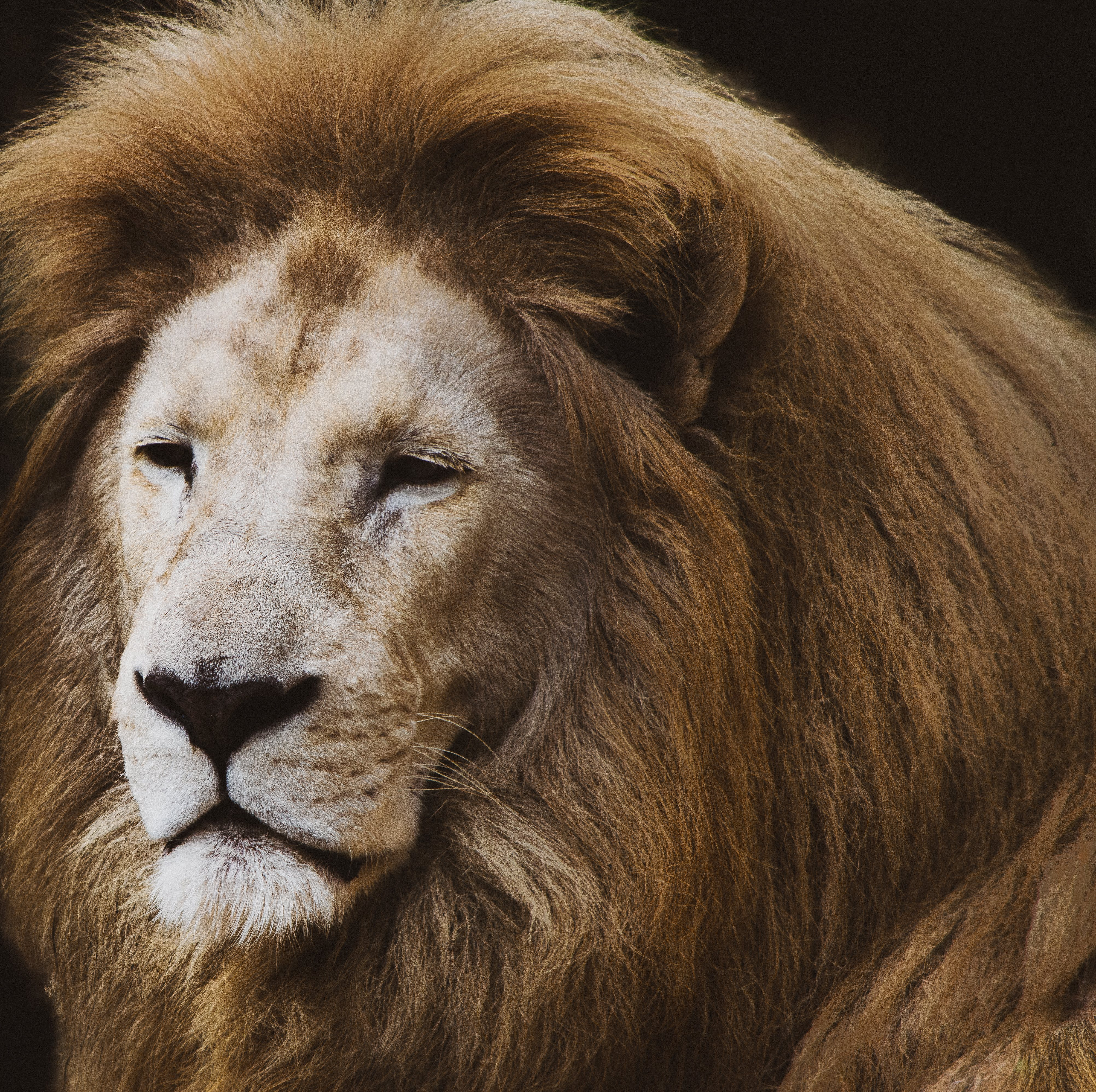 動物, 動物攝影, 哺乳動物, 捕食者 的