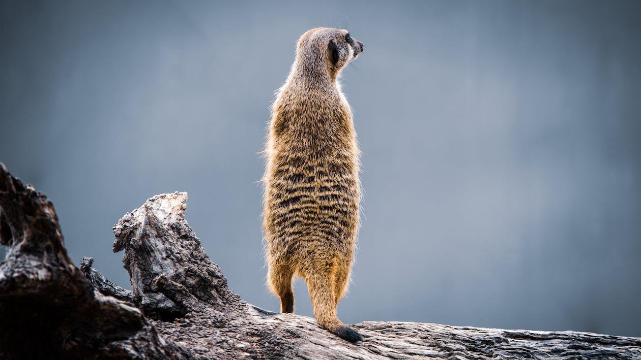Afrika, cicavec, divé zviera