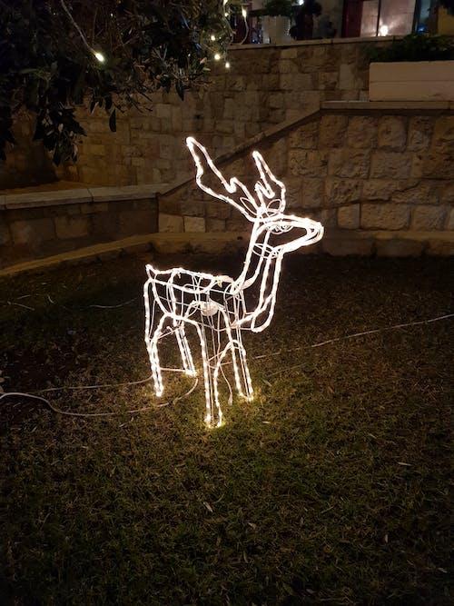 Free stock photo of christmas decoration, deer