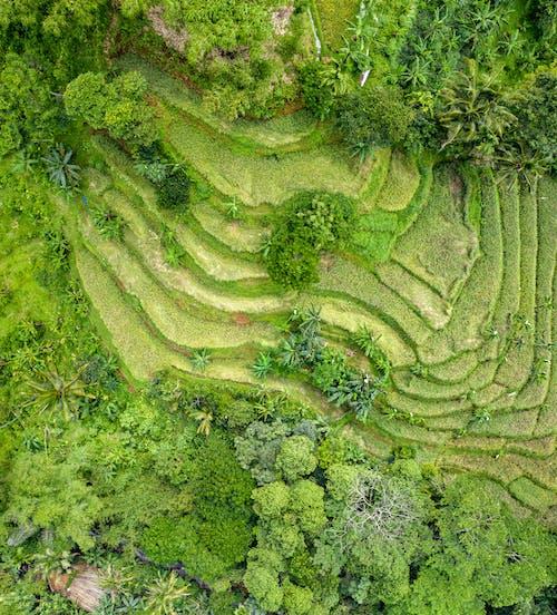 Darmowe zdjęcie z galerii z drzewa, fotografia lotnicza, fotografia z drona, las