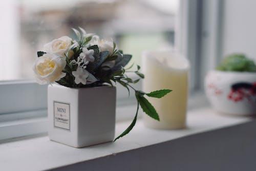 Fotobanka sbezplatnými fotkami na tému dekor, rastlina, rastlina vkvetináči, váza