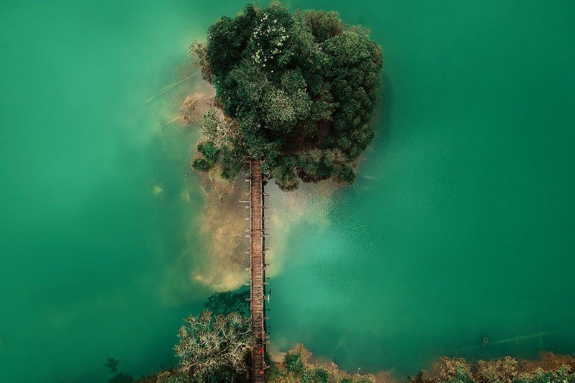 arbres, des de dalt, foto aèria