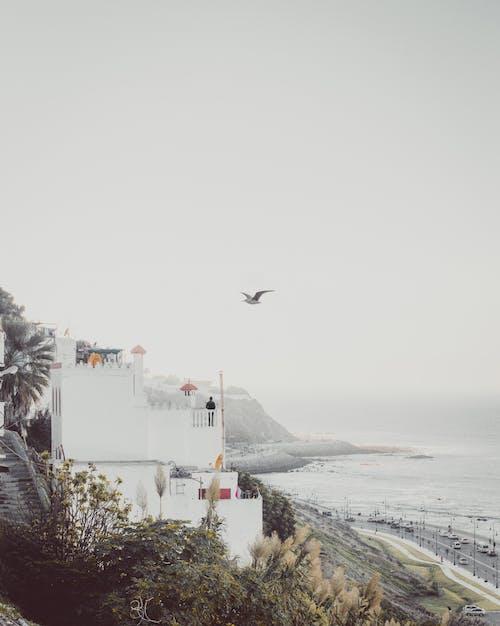 人, 冰, 冷, 多雲的 的 免费素材照片