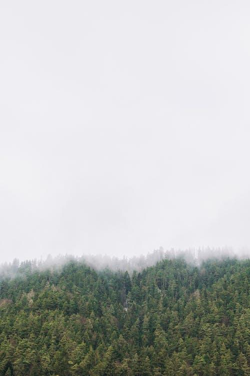 Ảnh lưu trữ miễn phí về cây, có sương mù, màu xanh lá, rừng