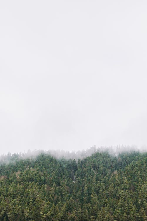 hmla, les, lesy