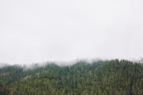 คลังภาพถ่ายฟรี ของ กลางแจ้ง, ต้นไม้, ธรรมชาติ