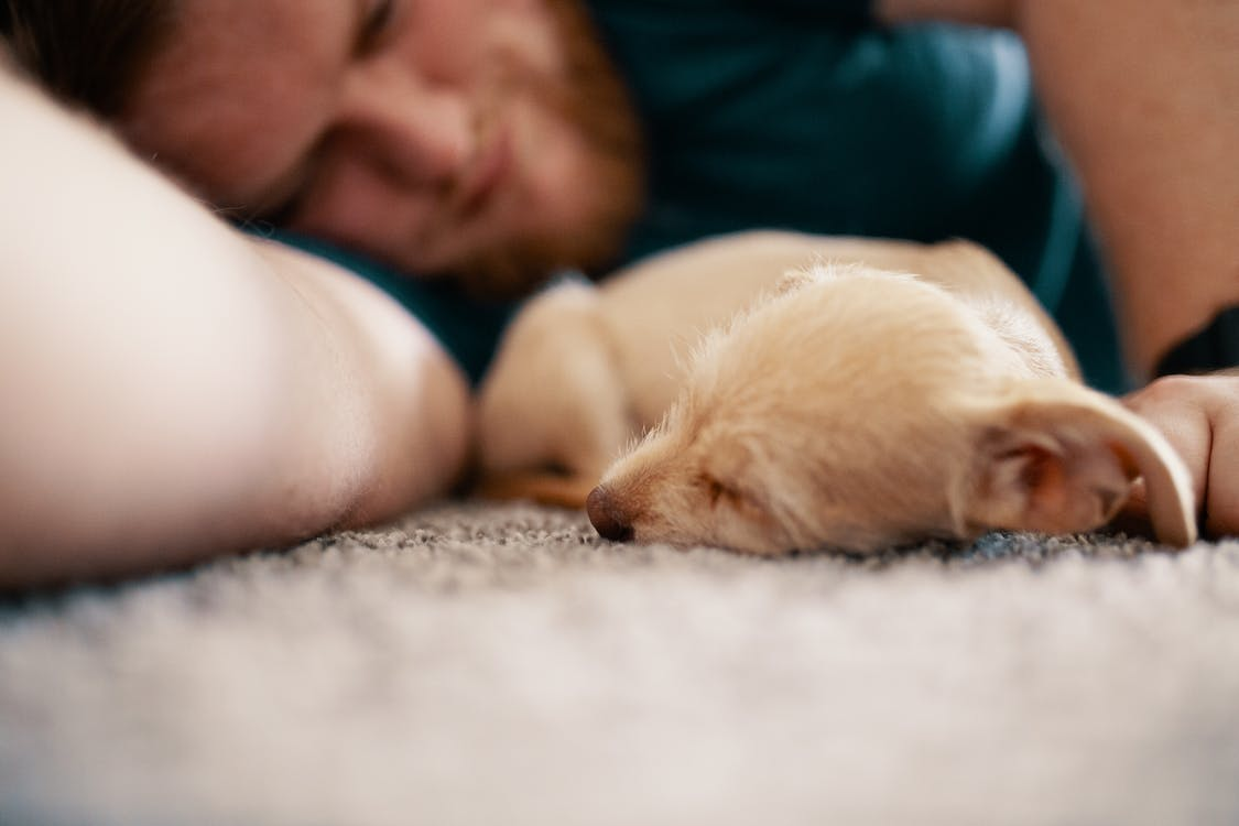 Close-Up Photo of Dog Sleeping Beside Man