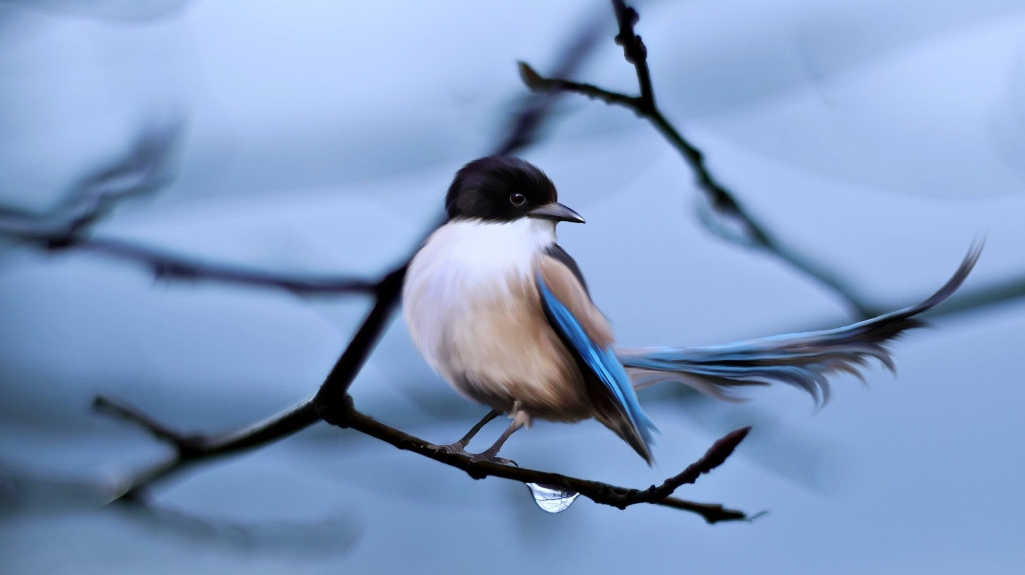 animal, bird, branches