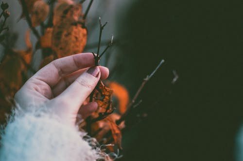 Close-Up Photo of Person Holding Twig