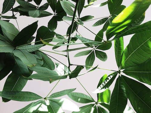 Бесплатное стоковое фото с завод, зеленый, зонтичное растение, снимок крупным планом