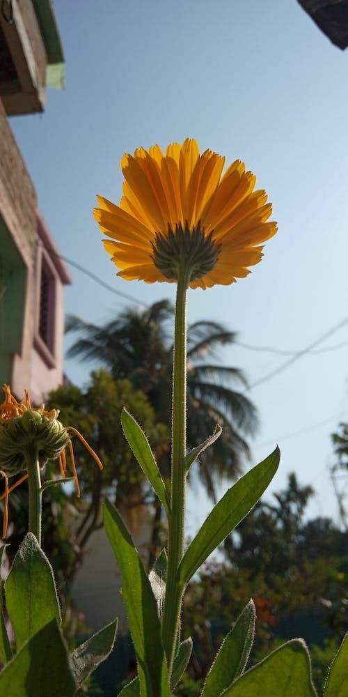 Ảnh lưu trữ miễn phí về vườn hoa nhà