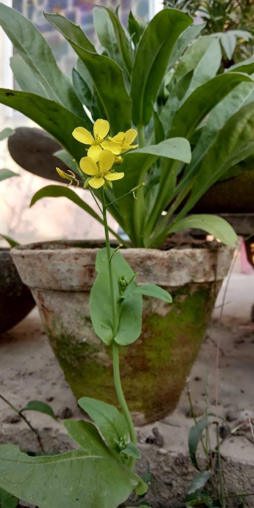 Ảnh lưu trữ miễn phí về hoa nhỏ
