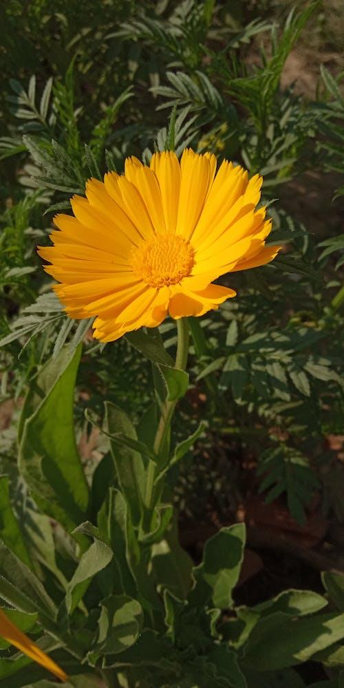 Ảnh lưu trữ miễn phí về hoa màu vàng trong ánh sáng mặt trời