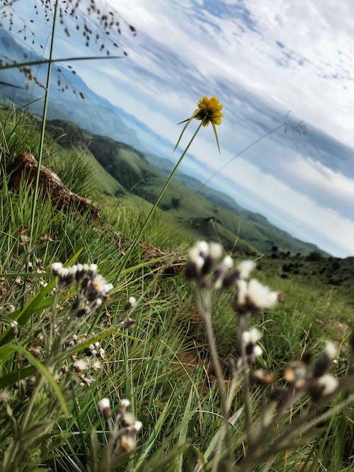 Photos gratuites de ciel bleu, fleur, fleur des champs, fleur sauvage