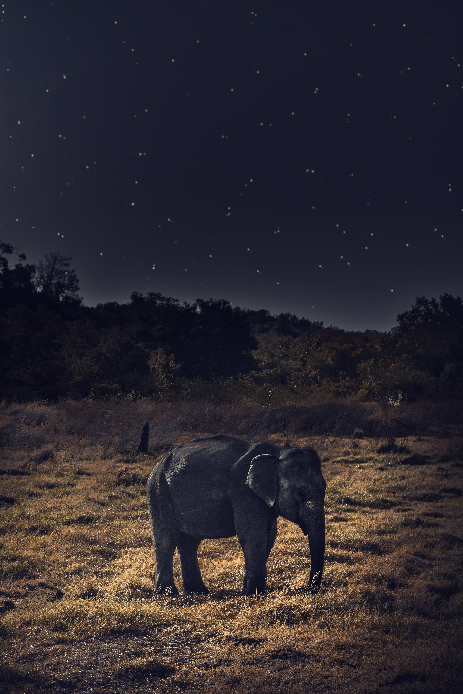 Gratis arkivbilde med afrikansk elefant, dyreliv, elefant, midnatt