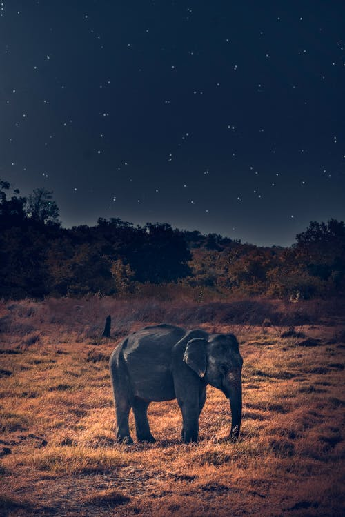 Fotobanka sbezplatnými fotkami na tému africký slon, celebrity, cicavec, divé zviera