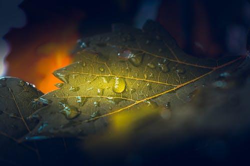 Free stock photo of 4k wallpaper, fallen leaves, nature, waterdrop