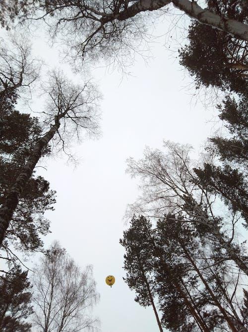 Gratis lagerfoto af ballon, perspektiv, tees