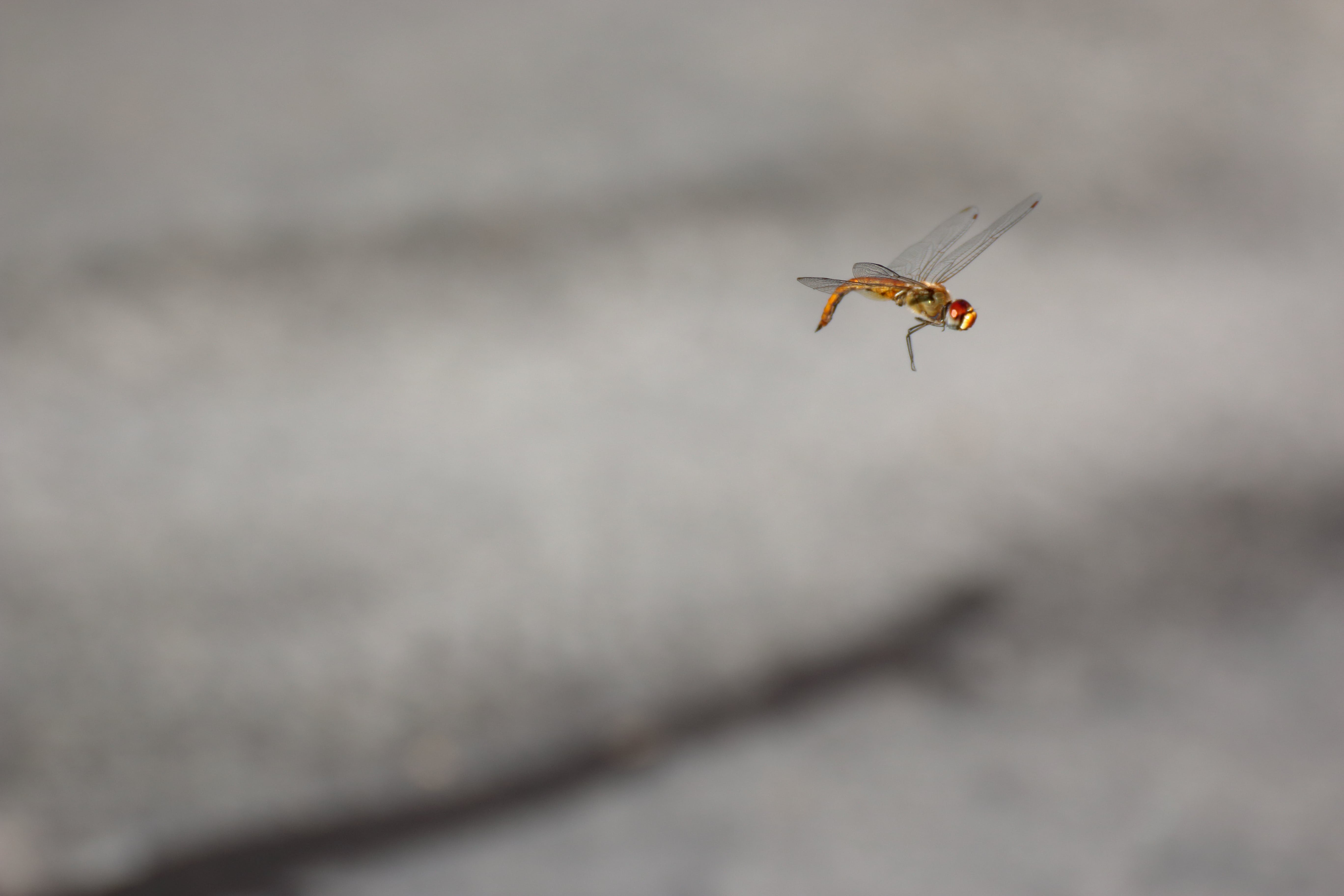 Free stock photo of dragonfly, flying, high speed, insect