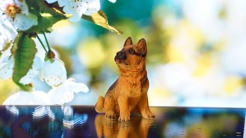 Ilmainen kuvapankkikuva tunnisteilla koiranpentu