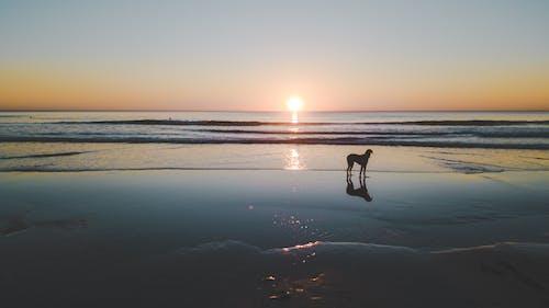 Gratis lagerfoto af baggrund, bølger, costa de caparica, hund