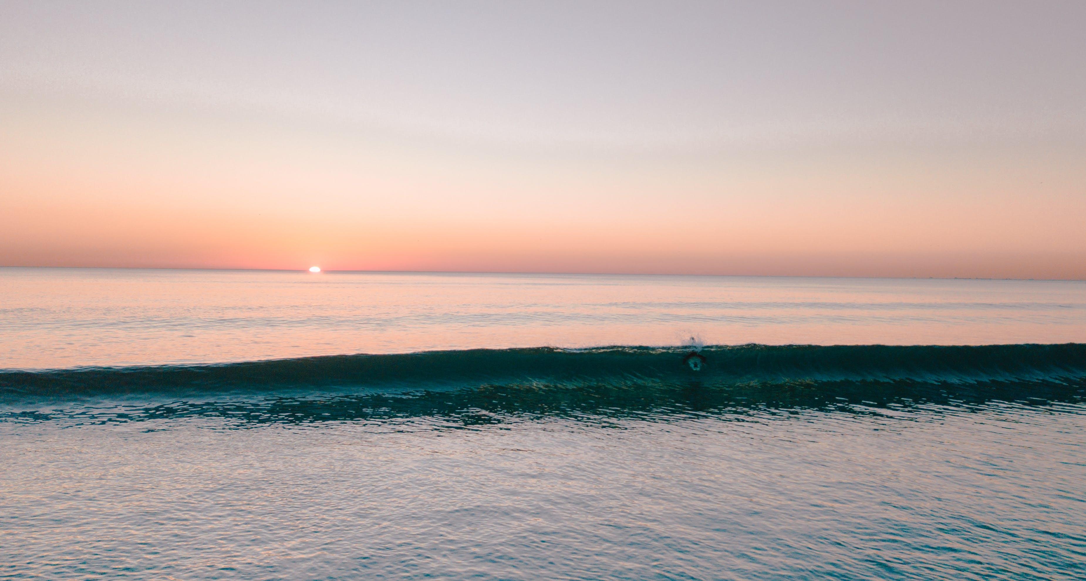 Free stock photo of beach, costa de caparica, dog, portugal