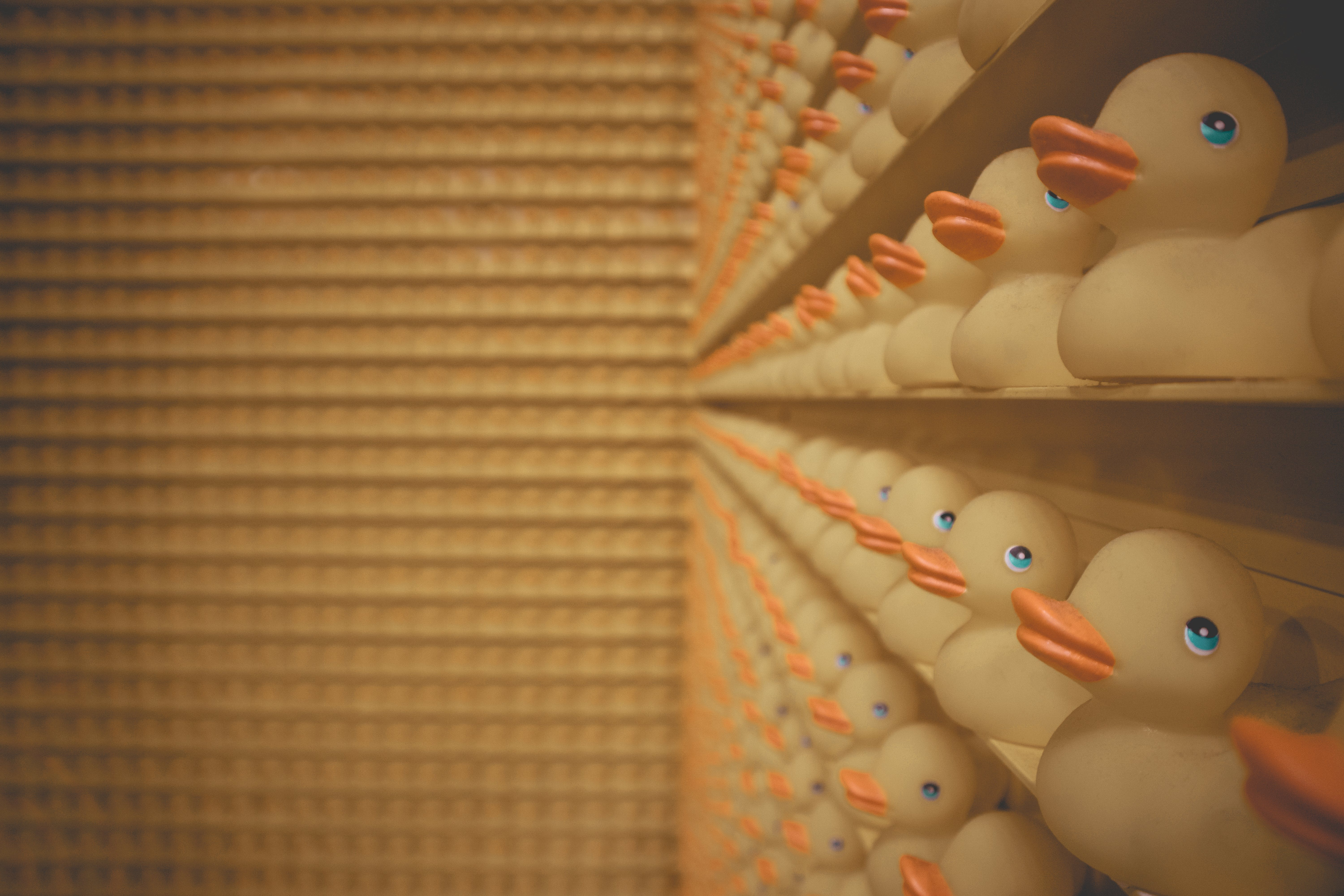 Lined Up of Rubber Duck on Shelf