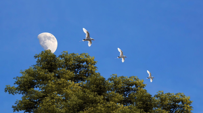 aves, árvores, lua