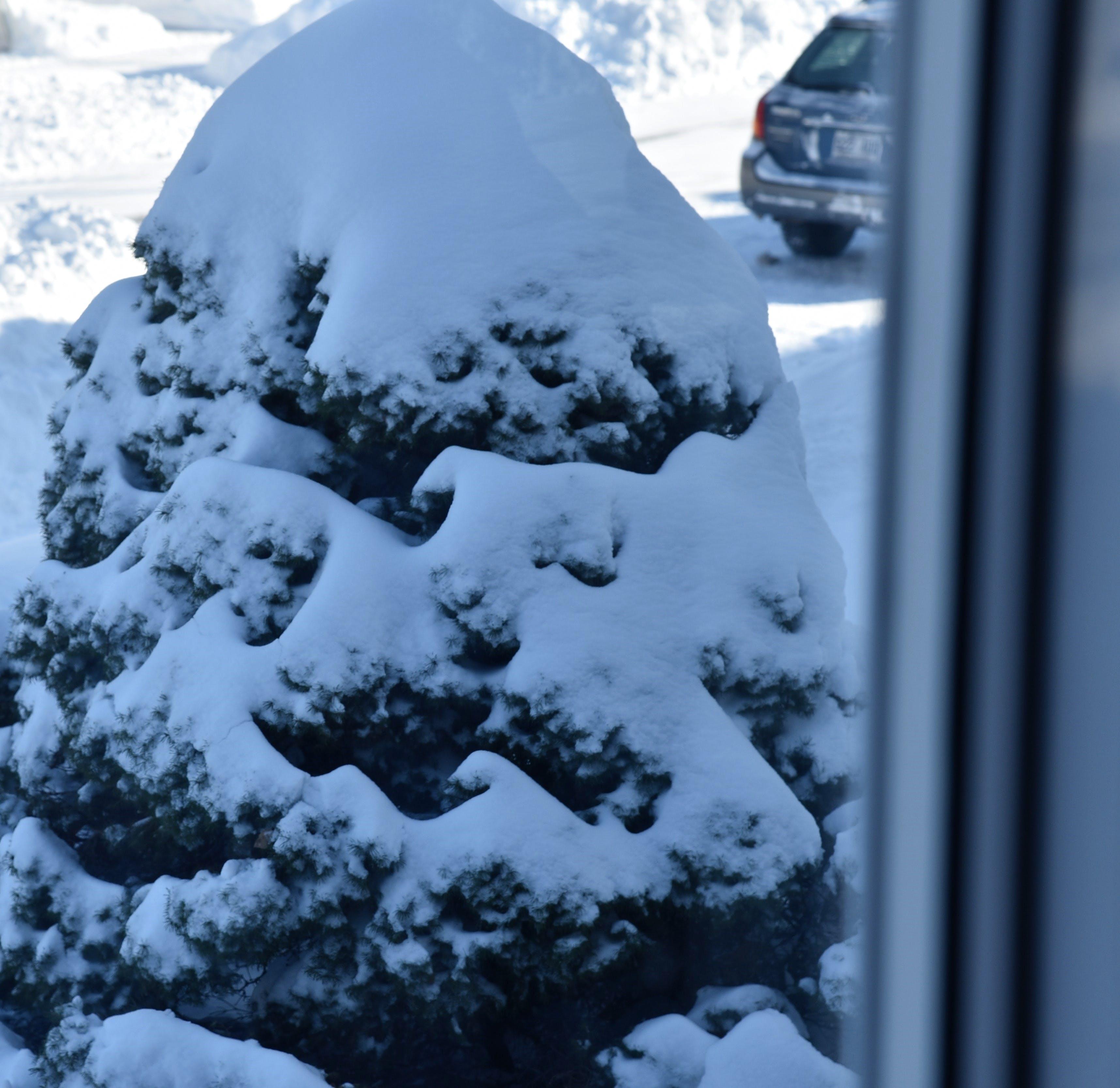 Free stock photo of snow, tree, winter