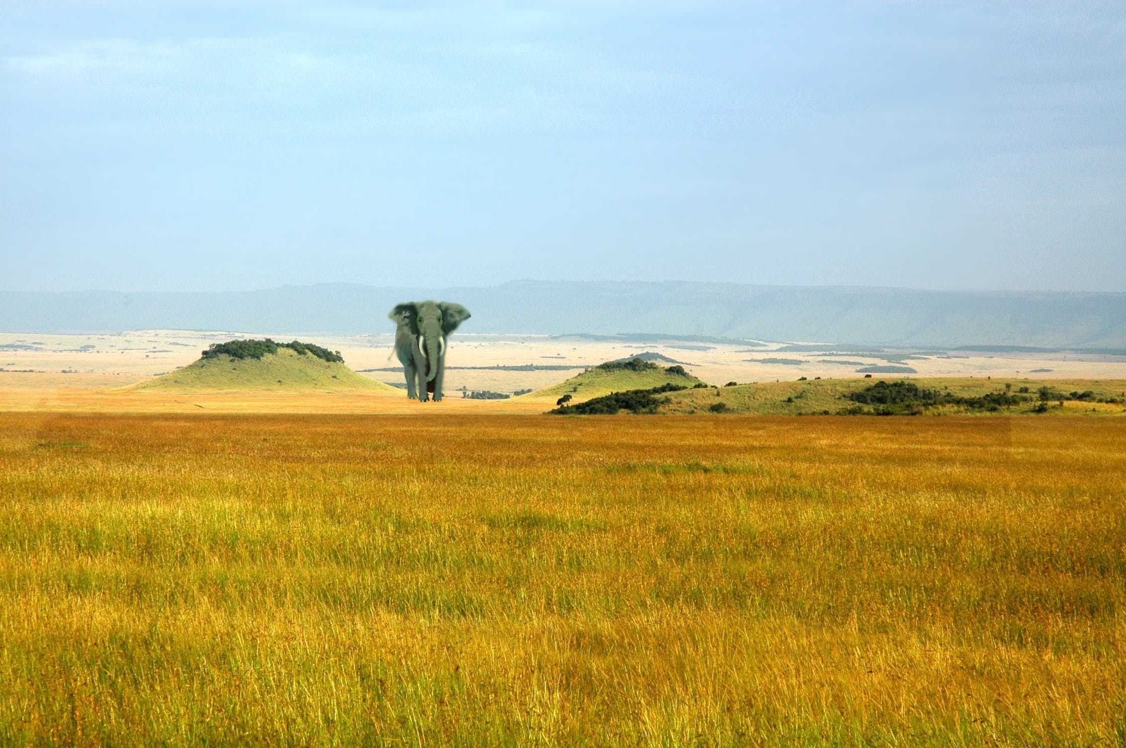 Free stock photo of africa, animal, elefante, natureza
