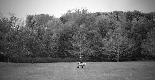 Ilmainen kuvapankkikuva tunnisteilla kävely, koira, lady, mustavalkoinen