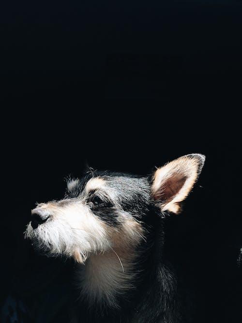 Foto d'estoc gratuïta de animal, buscant, caní, domèstic
