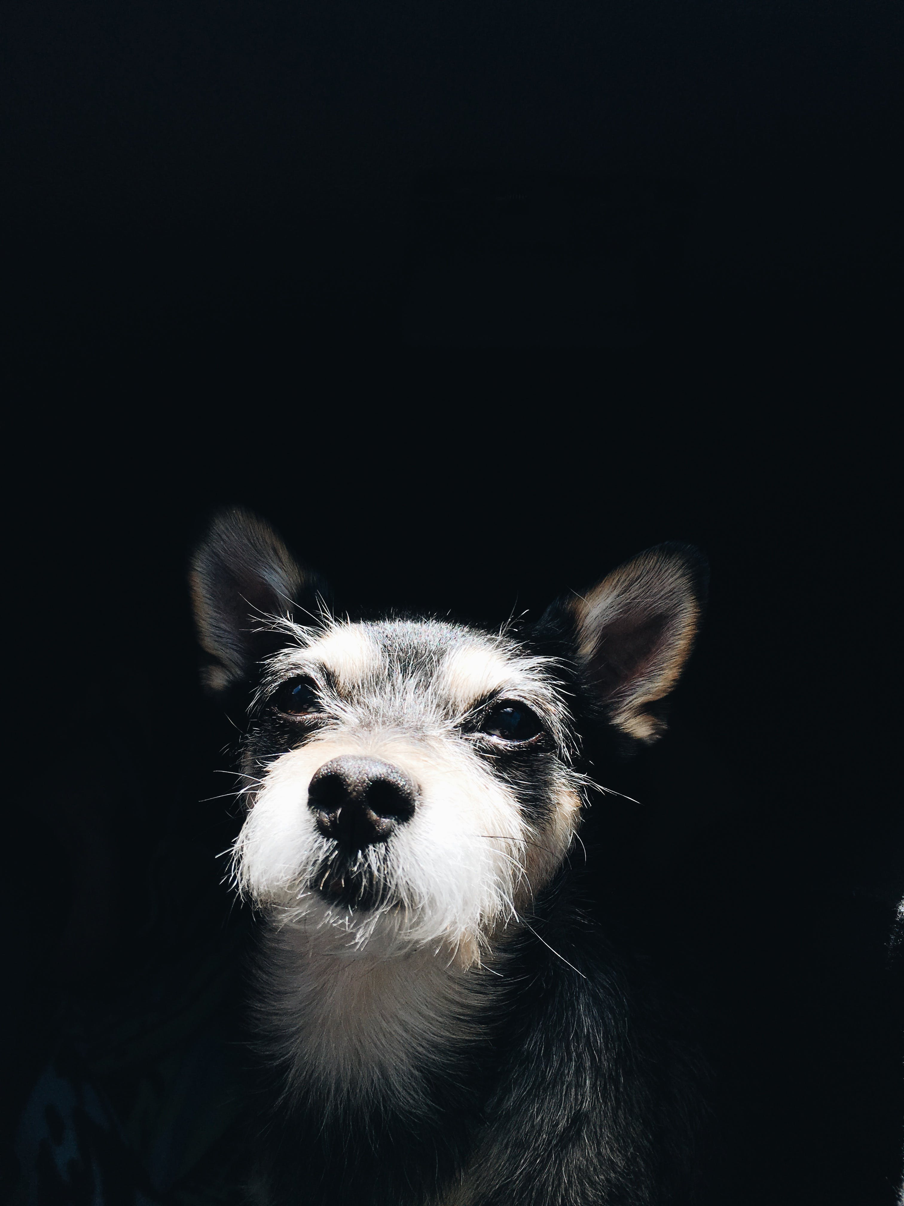 Photo Of A Puppy